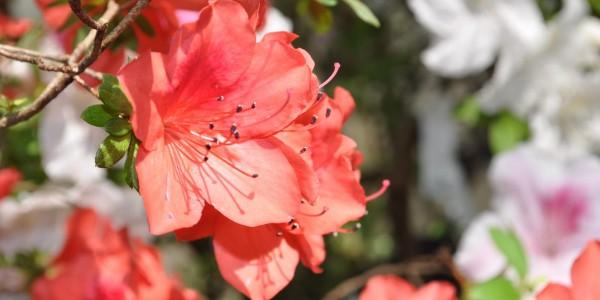 Палитра запахов и цветов
